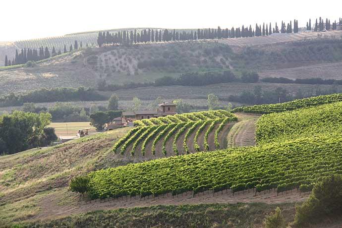 I vini della val d'Orcia